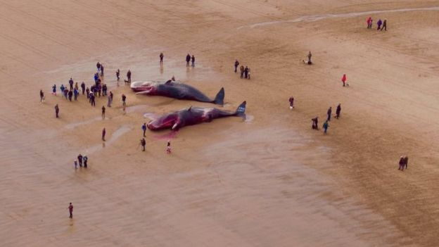 _87915188_whales.jpg
