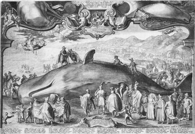 old whale_engraving.jpg