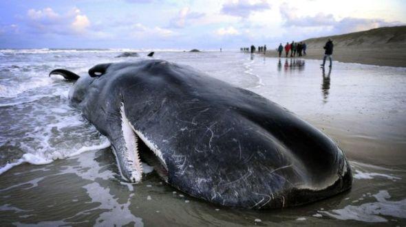 stranded whale.jpg